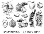 set of hand drawn coconuts.... | Shutterstock .eps vector #1445974844