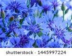 Blue Closeup Cornflowers ...