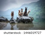 Five Dogs Are Sitting On A Rock ...
