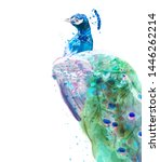 peacock isolated vector... | Shutterstock .eps vector #1446262214