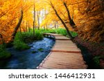 Beautiful Wooden Path Trail Fo...