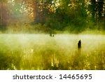 Fog In A Wood