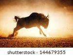 blue wildebeest running in dust ... | Shutterstock . vector #144679355