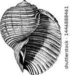dolium galea  vintage engraved... | Shutterstock .eps vector #1446888461