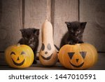 Stock photo black little cat with halloween pumpkins 1447010591