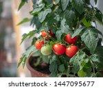 Summer  Bush  Fruits  Ripe And...