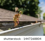 House Gutter Clogged With Tree...