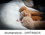 Stock photo the cat feeds a kittens 144746614