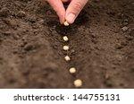 sow | Shutterstock . vector #144755131