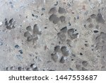 Dog's Footprints Filled With...