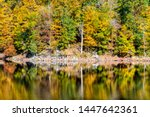 Great Falls trees reflection in canal lake river during autumn in Maryland colorful yellow orange leaves foliage by famous Billy Goat Trail