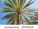 palm tree against blue sky | Shutterstock . vector #14478418