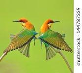 couple of bee eater bird | Shutterstock . vector #144787339