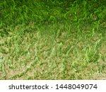 Green Ulva  Enteromorpha ...