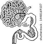 intestinal tract of a gorilla ... | Shutterstock .eps vector #1448169107