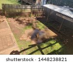 Stock photo tortoise is a small animal that has a shell on its back this is a small tortoise park where a 1448238821
