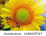 Sunflower And Butterfly In...