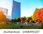 city park in autumn with tree...   Shutterstock . vector #1448490107