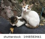 Stock photo stray cats mom and kitten sitting on the old motorbike 1448583461