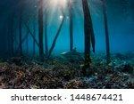 A Beautiful Black Tip Reef...