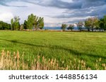 Nature Scenery With Grassy...
