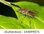 hydrophoria lancifer   Shutterstock . vector #144899071
