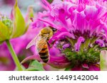 Bee On Pink Flowering Plant....