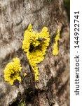 Small photo of Wood fand yellow fungus like a heart.