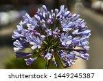 Multiple Light Blue Flowers...