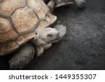 Stock photo gold tortoise in the ground 1449355307