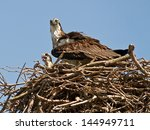 Mother Osprey And Her Baby