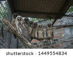Stock photo group of owls 1449554834