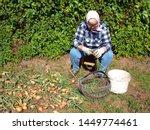 old senior woman gardener is...