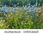 Cornflowers And Chamomiles Wil...