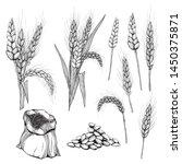Vector Hand Drawn Wheat Ears...