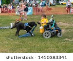 Small photo of Wachtebeke, Belgium, 13 July 2019. Hachiko. Assistance dogs are trained to assist people with a disability or condition. Dog picks up the jacket on the ground