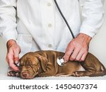 Stock photo young charming puppy at the reception at the vet doctor close up isolated background studio 1450407374