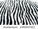 Zebra Black And White...