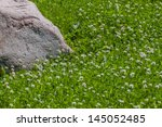 Granite stone in clover green flower field - stock photo