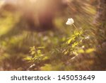 hope flower light | Shutterstock . vector #145053649