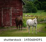 Horses Standing In Front Of Ol...