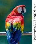 A Colorful Parrot Sits On A...
