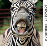 zebra smile and teeth | Shutterstock . vector #145093609