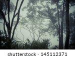 trees in dark forest | Shutterstock . vector #145112371