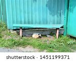 Stock photo sleeping kitten under the bench 1451199371