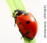 ladybug on green - stock photo
