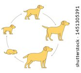 round stages of dog growth set. ...   Shutterstock .eps vector #1451305391