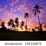 Stock photo view silhouetted of coconut tree 145136875