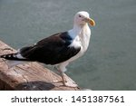 Stock photo wild herring gull in a port 1451387561