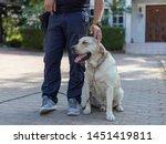 trainer is stroking head light...   Shutterstock . vector #1451419811